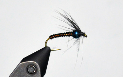 January Fly of the Month