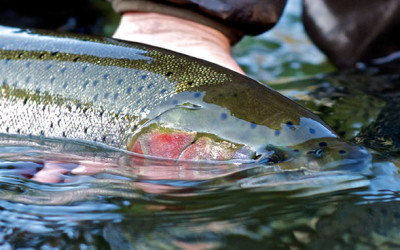 Steelhead Outing  |  Brule River | October 12-15