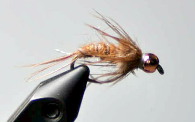 Fly of the Month November 2011