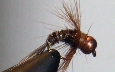 Fly of the Month May 2011